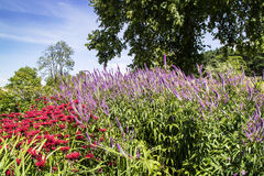 Monarda and Veronica flowers in a garden`s border. Stock Photography