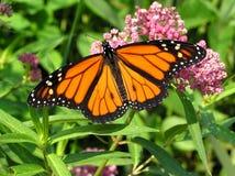 monark Royaltyfria Bilder