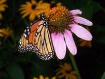 Monark butterly på blomman royaltyfri fotografi