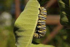 Monark Caterpillar arkivbild