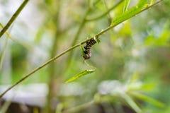 Monark Caterpillar på en filial i trädgården arkivfoto