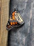 Monark på en beskickning arkivbilder