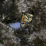 Monark som omges av buskar royaltyfria foton