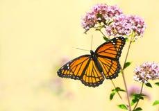 Monarkfjäril. fotografering för bildbyråer