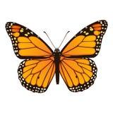 Monarkfjäril. Hand dragen vektorillustration Arkivbilder