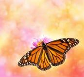 Monarkfjäril på bokehbakgrund royaltyfri bild