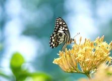 Monarkfjäril som parkeras på blommastjälk Arkivfoton