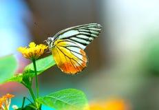 Monarkfjäril som parkeras på blommastjälk Arkivbild