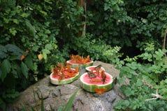 Monarkfjärilar Royaltyfri Fotografi