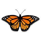 Monarque réaliste de papillon de vecteur Images stock