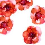 An?monas rojas Tarjeta de felicitaci?n cuadrada con las flores Ilustraci?n de la acuarela foto de archivo