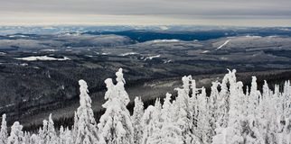 The Monashee Mountains from Big White, BC. Caked trees and dense forest cover the area in winter Stock Photo