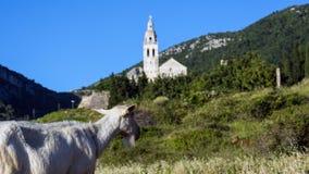 Monastère d'église de chèvres Photos libres de droits