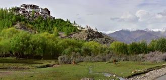 Monasterio budista Masho: en el top de la colina entre verde los árboles colocan el altos gompa, blanco y Borgoña tibetanos antig Foto de archivo libre de regalías
