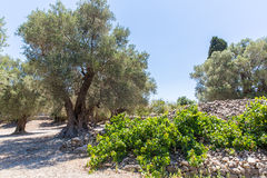Monastery (friary) in Messara Valley at Crete island in Greece Royalty Free Stock Image