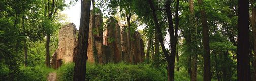 Monastery ruin in the forest Royalty Free Stock Images