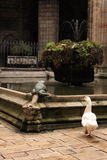 Monastic goose. Stock Image