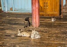 Monatery de salto interno dos gatos Imagem de Stock Royalty Free