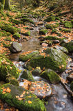 The Monbach brook in the nature reserve Monbachtal Stock Photos