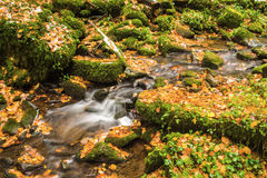 The Monbach brook in the nature reserve Monbachtal Royalty Free Stock Photos