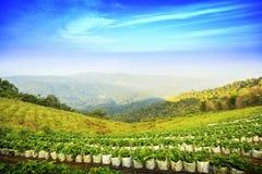 Moncham Chiangmai Thailand Lizenzfreies Stockbild