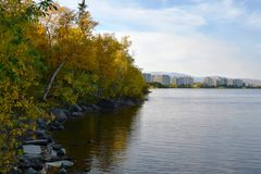 On a stony shore, trees with colorful autumn leaves bend over calm water Stock Images