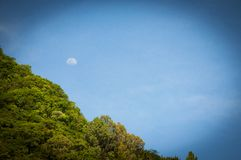 Mond über den Bäumen Lizenzfreie Stockbilder