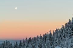 Mond über eisigem Wald Stockbild