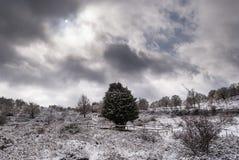 Mond über schneebedecktem Wald Stockbilder
