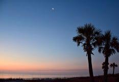 Mond über zwei Palmen Lizenzfreie Stockbilder