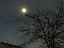 Mond-Aufstieg Lizenzfreie Stockbilder