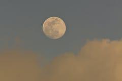 Mond am blauen Himmel Stockbilder
