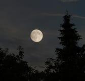 Mond in den Bäumen Stockfotografie
