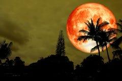 Mond des vollen Bluts über Schattenbildkokosnusspalme auf Wald Stockfotos