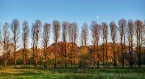 Mond im blauen Himmel über den Bäumen im Herbst stockfoto