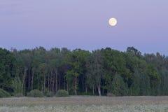 Mond steigt über Wald lizenzfreie stockfotos