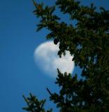 Mond und Tannenbaum im Winter Stockfotos