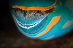 Mond van papegaaivissen Royalty-vrije Stock Foto