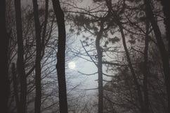 Mondabflussrinnenbäume nachts Lizenzfreie Stockfotografie