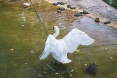 Monde étonnant d'oiseaux Images stock
