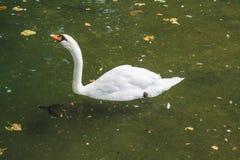 Monde étonnant d'oiseaux Photos stock
