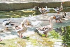 Monde étonnant d'oiseaux Image stock