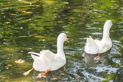 Monde étonnant d'oiseaux Photo libre de droits