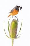 Monde animal et de plante. Images libres de droits