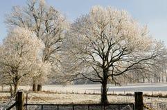 Monde blanc d'hiver Photographie stock libre de droits