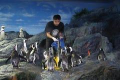 Monde d'océan du Siam photos stock