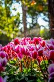 Monde de flore Photo libre de droits
