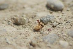 Monde de fourmi Photo stock