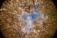 Monde de grain d'orge vers le haut de côté vers le bas Images stock