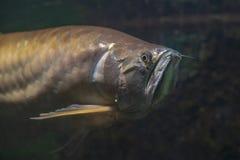 Monde de l'eau de zoo de Prague photographie stock